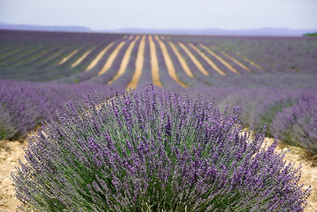 provence-725856_640