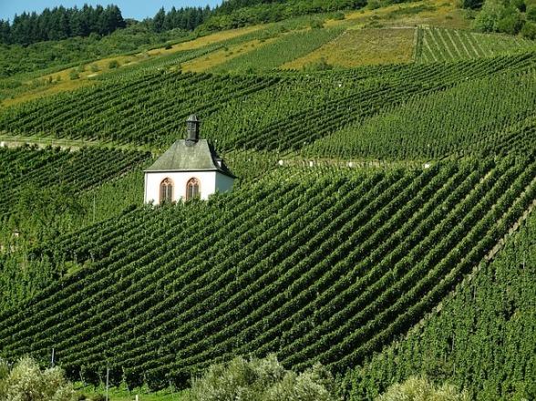vineyard-973569_640