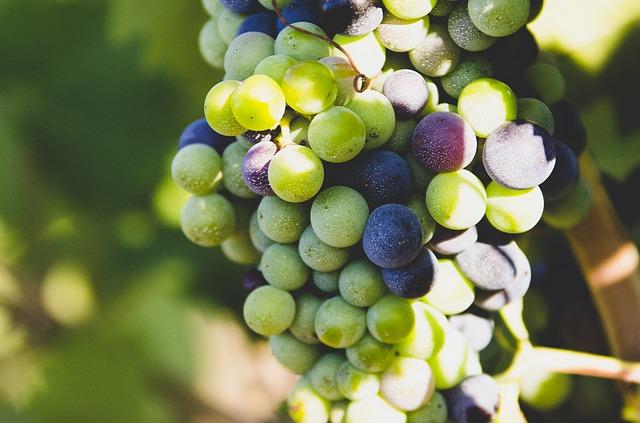 grapes-863703_640