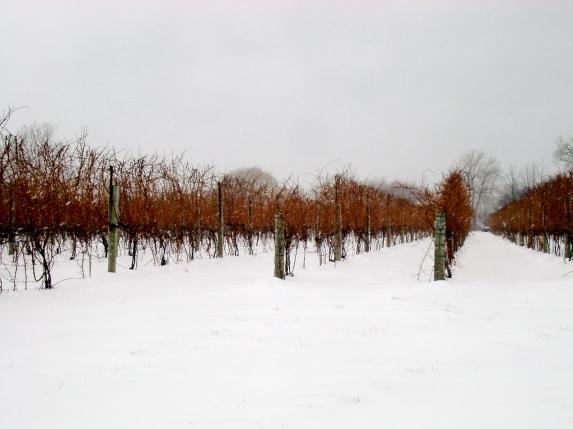Ice_wine_Niagara_Falls_canada