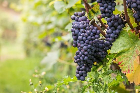 wine-980218_640