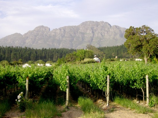 vines-and-mountains