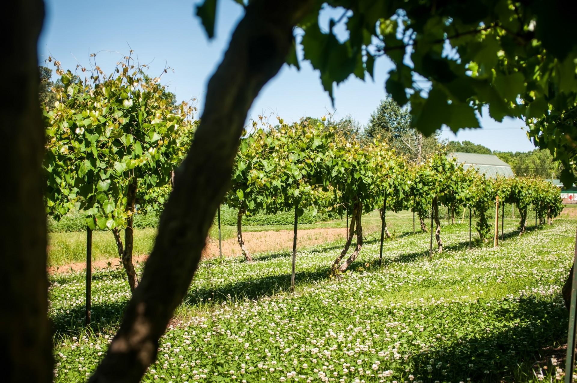 vinyard-farm-in-spring-137955324206s