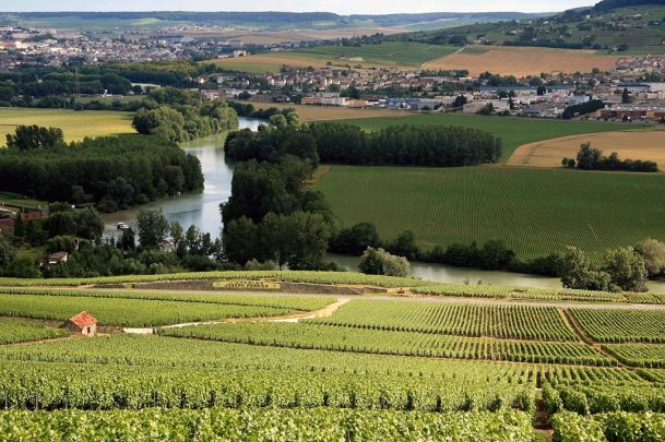 1024px-Champagne_Vineyards