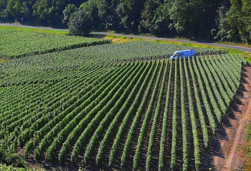 vineyard-1062602_640