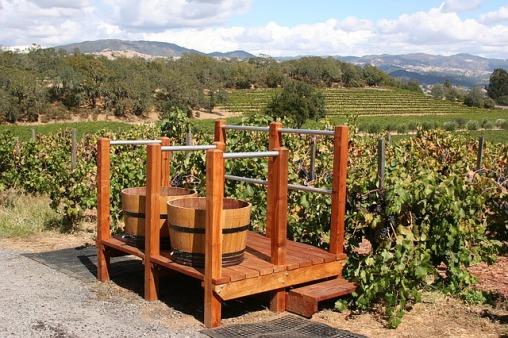 vineyard-1331574_640