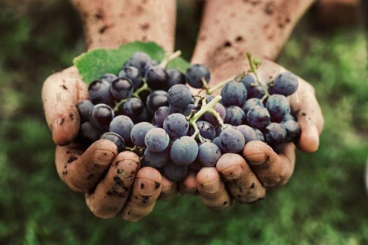 uva_curso_agricultura