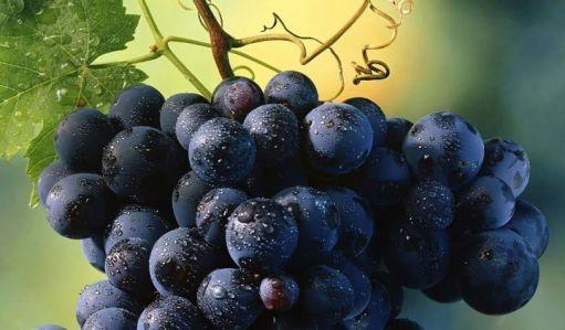 uvas-moradas-fuerte-25640