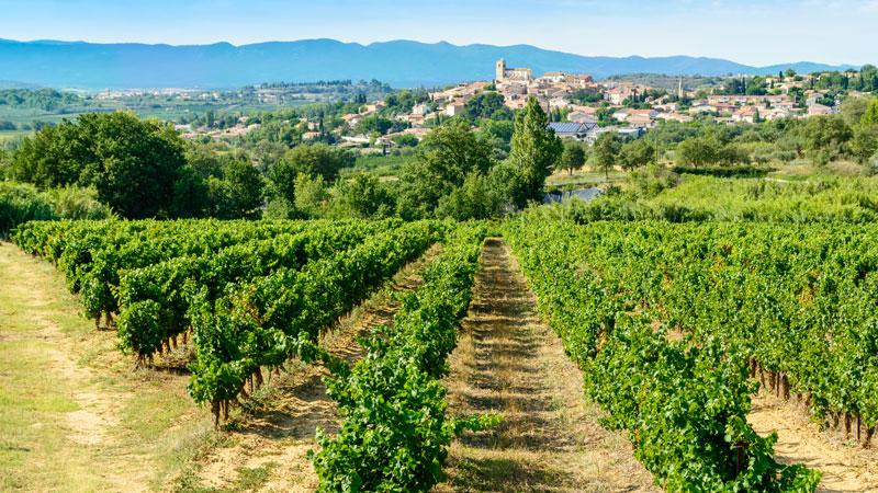 LanguedocRose_Header